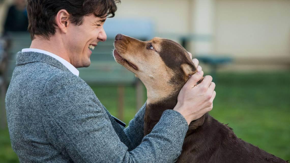 phim Đường Về Nhà Của Cún Con (A Dog's Way Home)