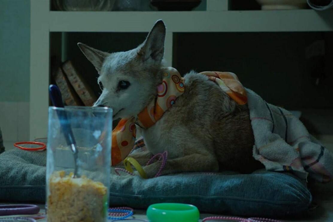 Con chó cũng là chi tiết quan trọng trong phim