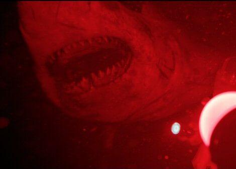 Cá mập trong phim vẫn còn đơ lắm, chưa uyển chuyển