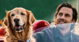 Ảnh bìa Cuộc Đời Phi Thường Của Chú Chó Enzo