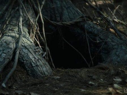 Gốc cây nơi mẹ quỷ ẩn náu