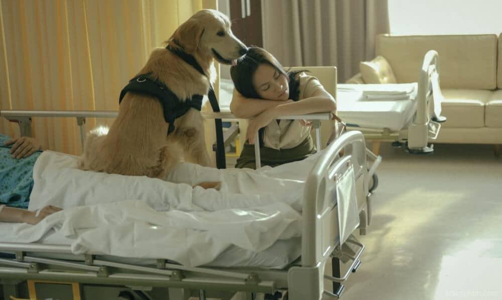 """Chú chó Ben cũng là """"nhân vật"""" được yêu mến trong phim Bằng chứng vô hình"""